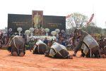 วันช้างไทย ยิ่งใหญ่ โชว์ 6 ฉากอลังการ เชิดชูช้างป้องชาติกู้เมืองคู่บารมีกษัตริย์ไทย ต.กระโพ อ.ท่าตูม จ.สุรินทร์