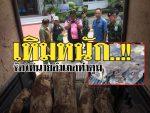 แฉ!!ขบวนการมอดไม้พะยูงเหิมหนักราคาแพงที่สุดในโลกและเหลือแค่ที่ประเทศไทยที่เดียว (มีคลิป)