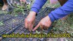 เผยเคล็ดลับ คัดเมล็ดพันธุ์ข้าวแบบง่ายๆ ให้งอกชัวร์ 100%(ชมคลิป)