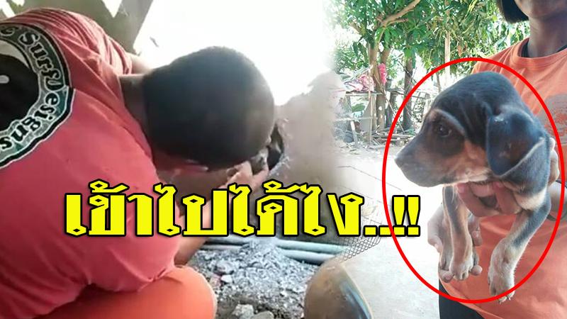 สุรินทร์-อาสากู้ภัย ช่วยน้องหมาติดอยู่ในกำแพงนานกว่า 1 ชม.ท่ามกลางชาวบ้านช่วยลุ้น (คลิป)
