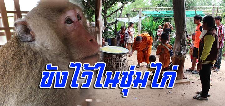 เจ้าจ๋อจอมป่วน เล่นเอาวุ้นทั้งคนทั้งพระ หาเจ้าของลิงไม่มีหวั่นกัดเด็ก (ชมคลิป)
