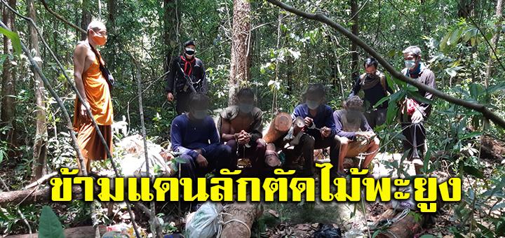 สุรินทร์-จับกุมชาวกัมพูชา ลอบข้ามแดนตัดไม้พะยูงในไทย กว่า 20 ท่อน